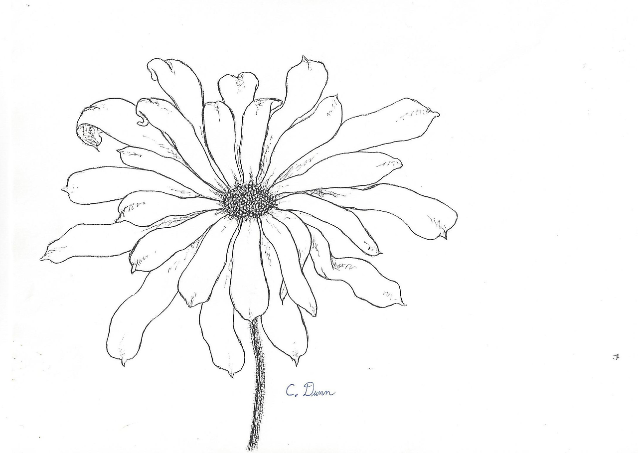 Transparent Flower Drawing Tumblr