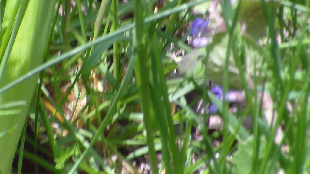 20140510XD-Flowers2 034