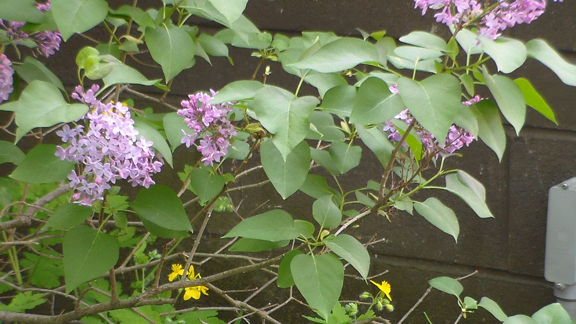 20140512XD-Flowers_III (6)_small