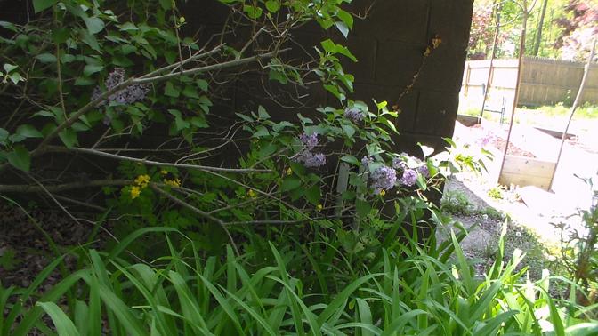 20140514XD-LilacsBlooming 010_smallr