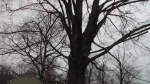 20141205XD-NeighborhoodShots (25)