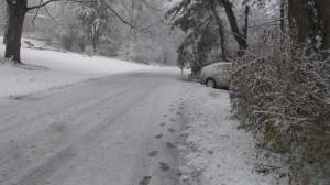 20141126XD-SnowyDay (5)