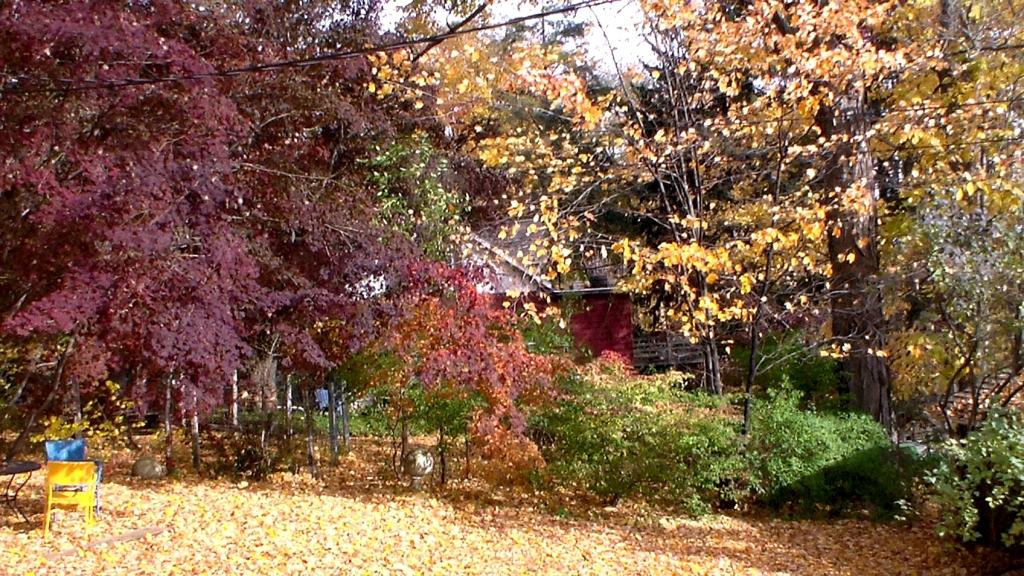 20151029XD-AutumnInOurYard (7)
